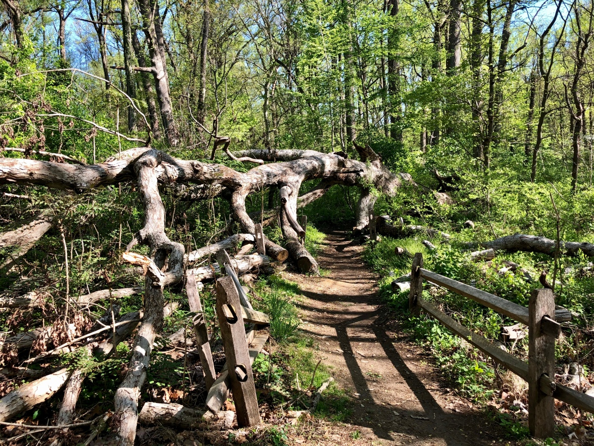 15 WITHIN 15: Trail running theWissahickon